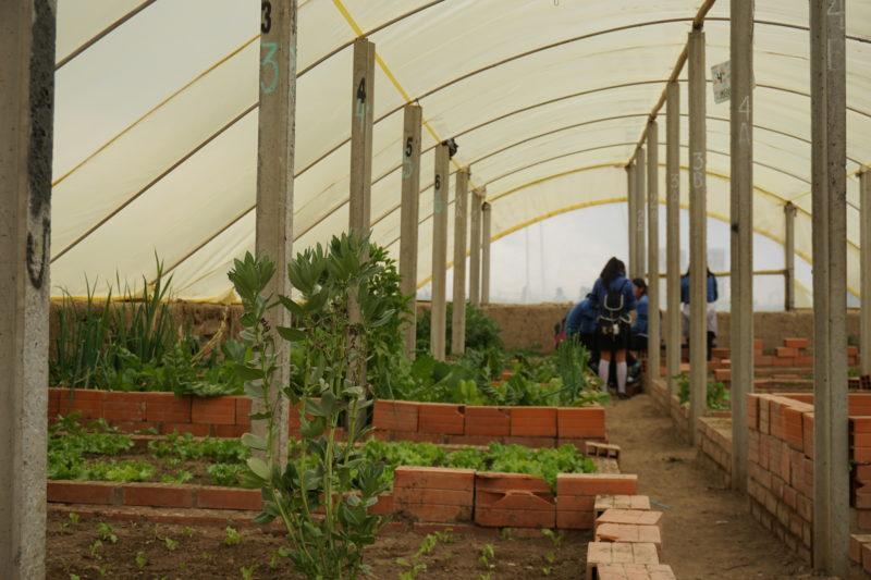 Eleverna spenderade rasten efter lektionen i ett av växthusen som finns på skolgården. Foto: Agnes von Unge